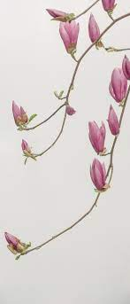 Flower Wallpapers: Free HD Download ...