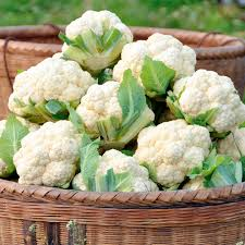 cauliflower plant. Fine Cauliflower Cauliflower Plants  Late Summer Continuity Collection Inside Plant I