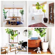So Hot Right Now: Big Green House Plants — Rowhouse Revival