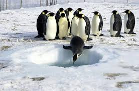 Image result for penguins