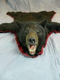 canada black bear taxidermy rug mount manitoba canada