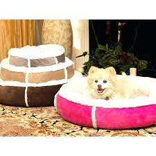 best area rugs for pets rug pet odor removal urine resistant proof best area rugs for pets