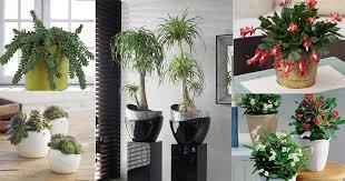 Indoor Garden Design Ideas Gorgeous 48 Best Indoor Succulents To Grow At Home Balcony Garden Web