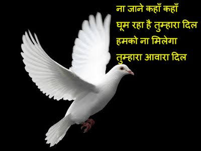 paper shayari in hindi