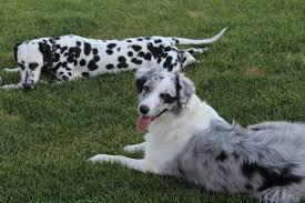100 black white dog names for
