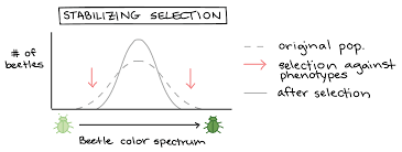 Natural Selection In Populations Article Khan Academy