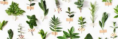indoor herb garden everything you need