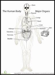 There is a printable worksheet available for download here so you can take the quiz with pen and paper. The Human Anatomy 5th Grade Worksheets Education Com