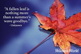 Fall Quotes Classy Fall Quotes And Sayings To Get You In The Spirit Of Autumn Woman's