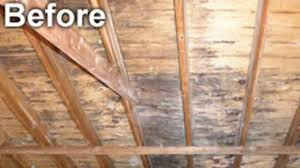 mold in attic. Perfect Attic Attic Mold Removal By MoldCode Cleaning On In O