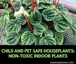 non toxic indoor plants child and pet safe houseplants