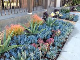 drought tolerant garden. Drought Tolerant Garden Design Ideas Inspirational About Gardens Pinterest Succulent