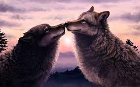 21+ Love Wolf Wallpapers: HD, 4K, 5K ...