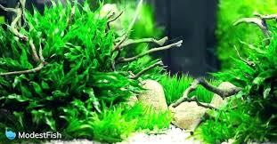 Freshwater Aquarium Rock Types Aquariums For Dummies Pdf
