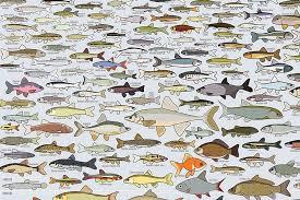 Pop Chart Lab Freshwater Fish Of America