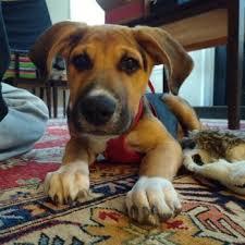 photo of main street oriental rugs ellicott city md united states puppy