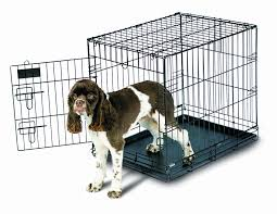 Amazon.com : Aspen Pet Home Training Wire Crate, Black - 36x24x27