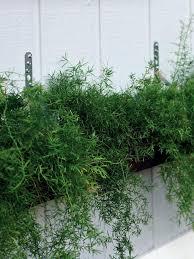 build a living wall planter