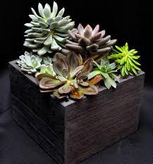 wood grain succulent garden