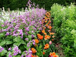 inspiration sarah raven s cutting garden flowers in rows specifically for cuttings what