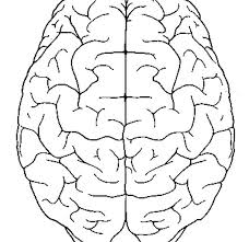Brain Coloring Page Brain Coloring Page Brain Coloring Page Growth