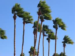 Image result for windy