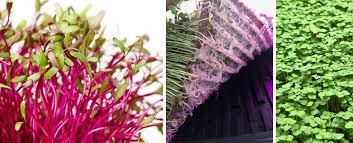 Microgreen Growing Chart Microgreen Seed Density Charts Cropking
