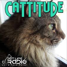 Cattitude -  Cat podcast about cats as pets  on Pet Life Radio (PetLifeRadio.com)