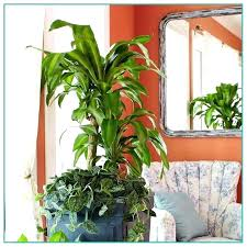 big house plants i m having a thing about really houseplants the edited best large uk abou very low light houseplants