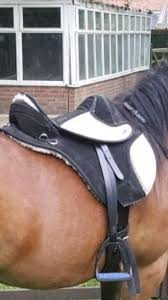 torsion treeless saddle. comes with girth but no stirrups as they are now on another saddle. brilliant condition has minimal use. can be posted. torsion treeless saddle