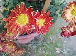 beautiful flowers in stan