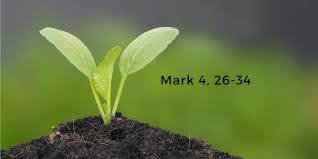 Mark 4,26-34 | Digital Catholic Missionaries (DCM)