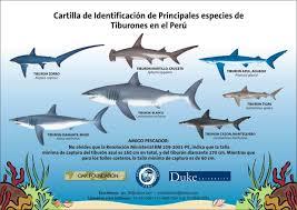 Types Of Sharks Chart Pro Delphinus