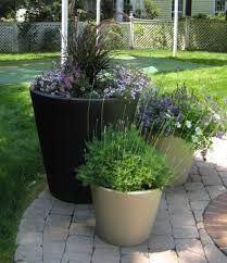 Small Picture Garden Pots Design Ideas Cactus And Succulents Container Gardening