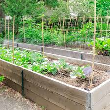 Small Picture Dos and Donts for Your Raised Garden Bed Garden Club
