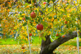 Image result for fruit tree
