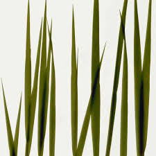 tall grass silhouette. Tall Grass Texture Png 02 By Gd08 On DeviantART Silhouette