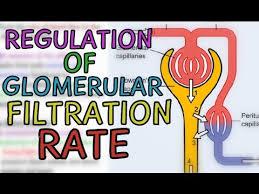 Gfr Rate Chart Regulation Of Glomerular Filtration Rate Gfr Extrinsic And Intrinsic Mechanisms