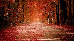fall nature backgrounds. Perfect Backgrounds Fall Nature Wallpaper Inside Backgrounds A