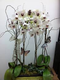 white orchid planting