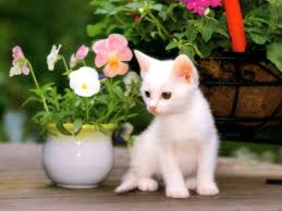 cute cats wallpapers free download. Unique Wallpapers Cute Cats Wallpapers On Free Download U