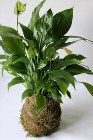 free house plants names fresh tropical top indoor hard to kill throughout tropical indoor plants