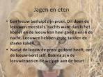 leeuwen - hoe ziet een leeuw eruit