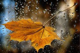 autumn rain quote with gif 2017