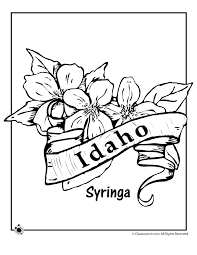Small Picture State Flower Coloring Pages Idaho State Flower Coloring Page