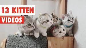 13 funny kittens funny cat video