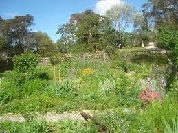 Kitchen Garden Blog X Seed Saver Networks Heritage Gardens Sustainable Self