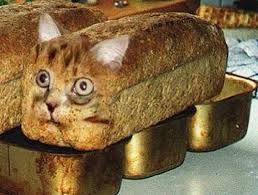 Cat In Bread Box New Mulpix Purebread Cat Up For Adoption Needs Very Little Attention