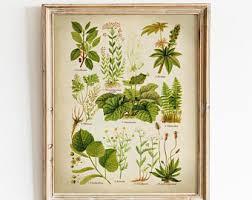 Botanical Print Printable Vintage Botanical Art Aromatic And