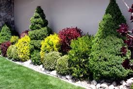 Small Picture Landscaping with Shrubs and Bushes Photos and Design Ideas